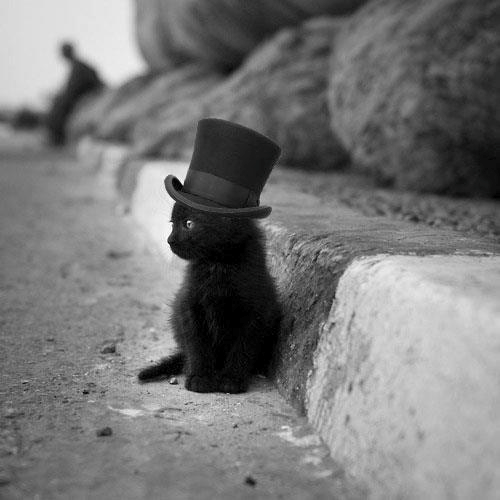 Black Kitty in top hat.