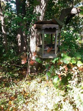 bird feeder no. 2